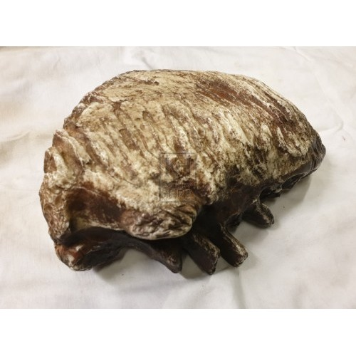 Mammoth tooth fossil