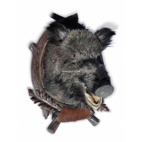 Boars Head on Wood Plaque