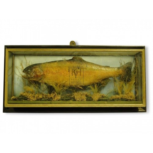 Fish in Display Case