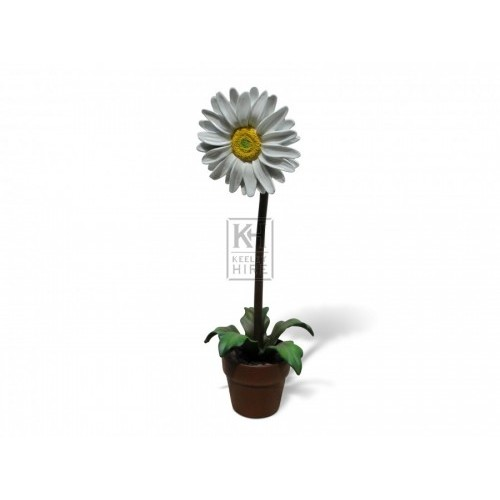 Large Daisy Flower