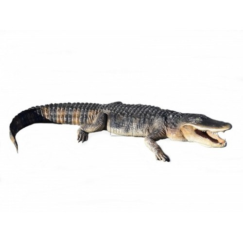 American Alligator 8ft