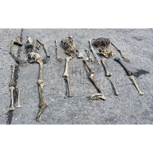 Skeleton remains