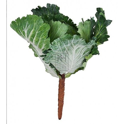 Leafy cabbage