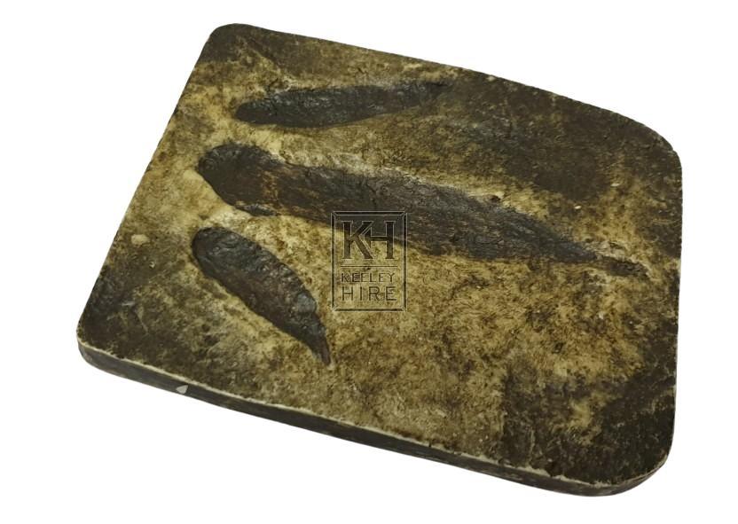 Foot print fossil