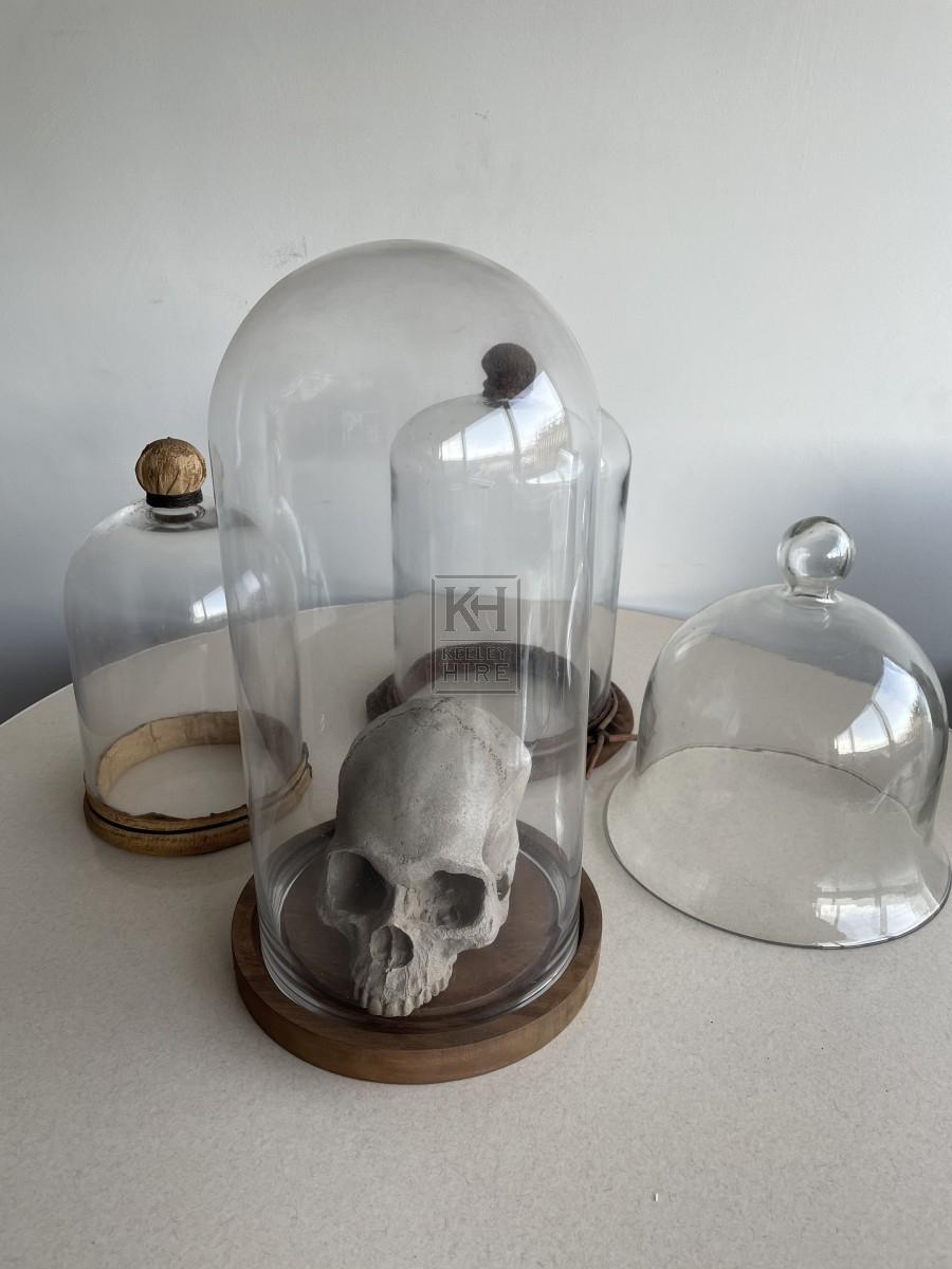 Assorted Large Specimen Jars