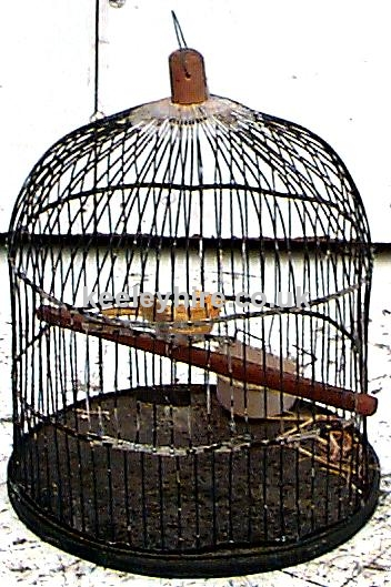 Domed Wire Birdcage