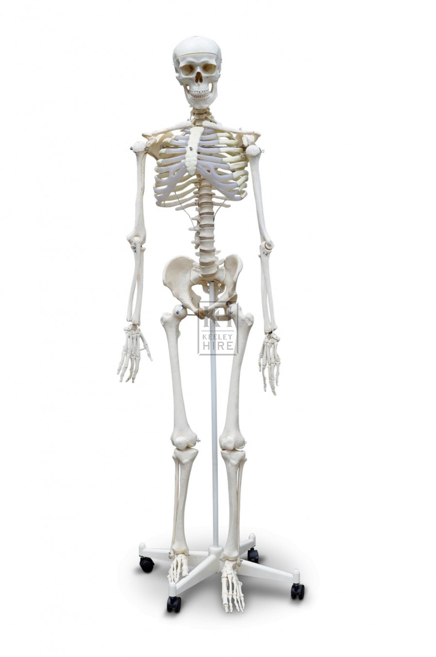 Figure - Skeleton