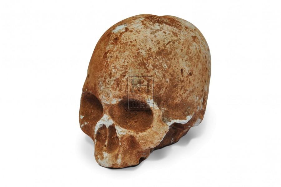Skull - Plaster