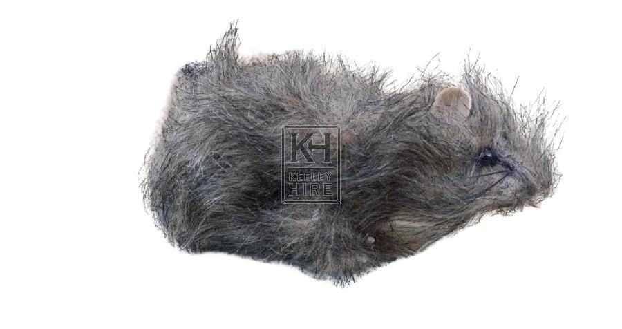 Dummy rat