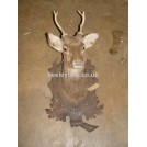 Stags head on plaque