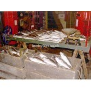 Trestle market stall - Fish