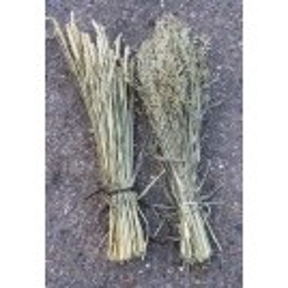 Bunch dried wheat
