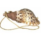 Large sea shell with strap