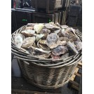 Large Basket Of Oyster Shells