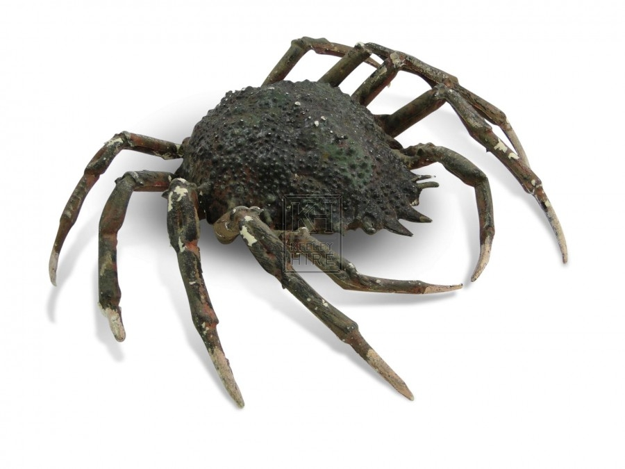 Crab - Spider
