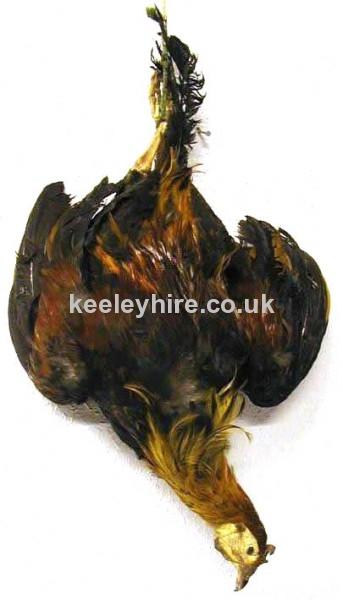 Hanging chicken