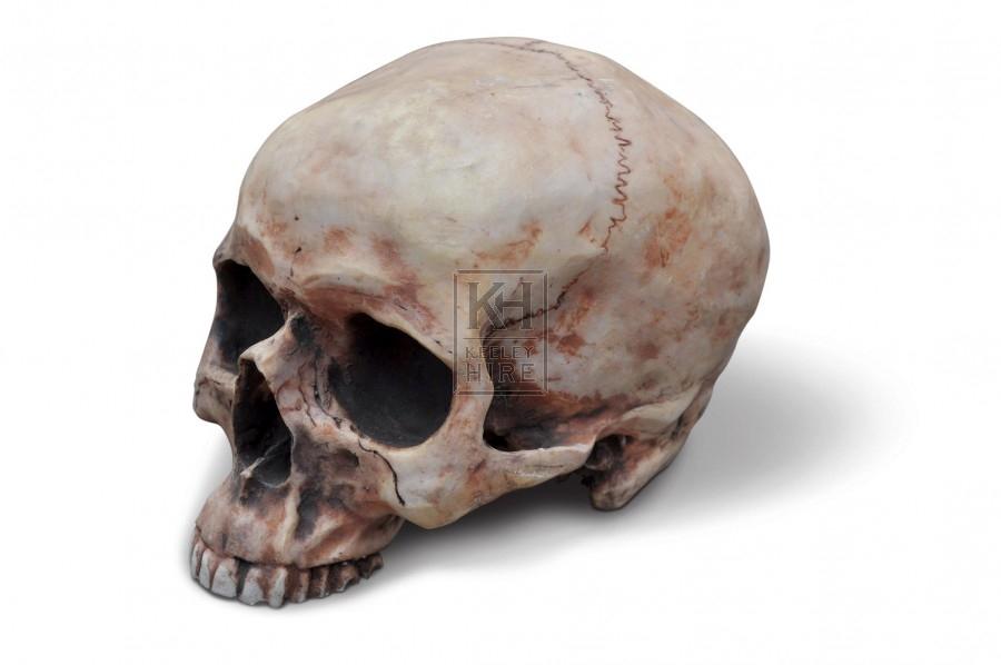 Hard resin skull
