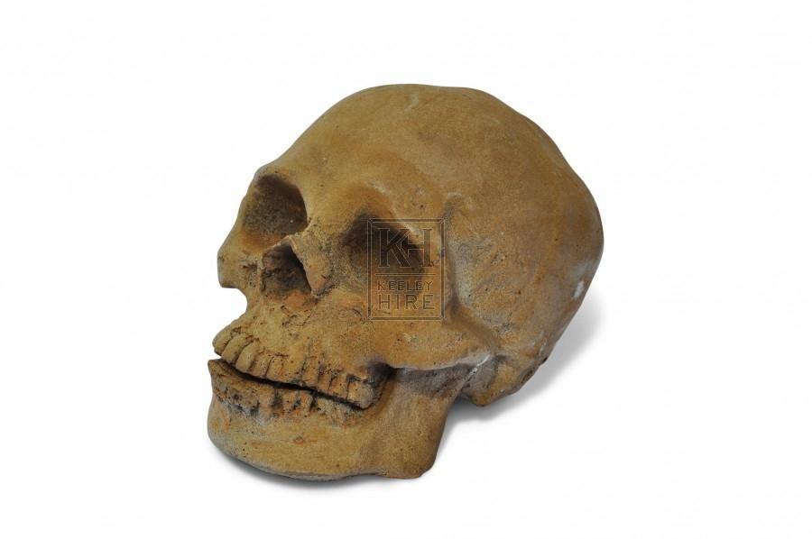 Skull - Yellowed