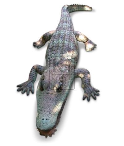 Alligator Caiman