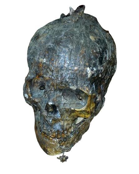 Skin covered skull